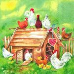 IHR Lovely chicken farm