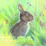 IHR Rabbit in the meadow