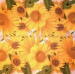 Bunch of sunflowers PACKUNG