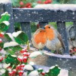 Lovely robins