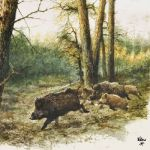 Wild boars in the woods