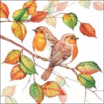 Robins in autumn