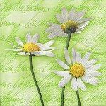 Blooming daisies green