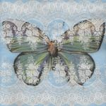 IHR Lacy butterfly blue