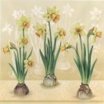 Narcis trio yellow