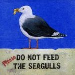 Please do not feed the seagulls
