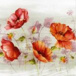 Poppies in Rhapsody