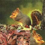 Squirrel + leaves